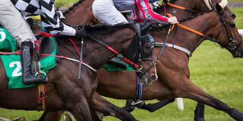 Close up on galloping race horses racing on track