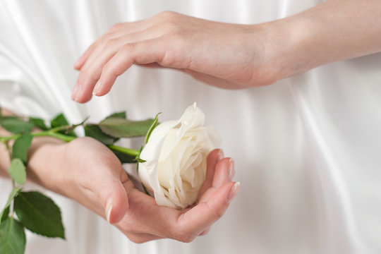 female hands hold white rose, concept of protection, tenderness, innocence.