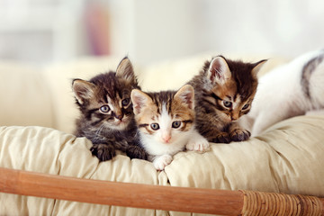 Cute funny kittens at home