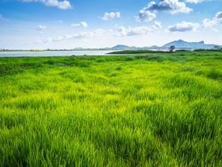 Green grass at lake park landscape Fotoväggar