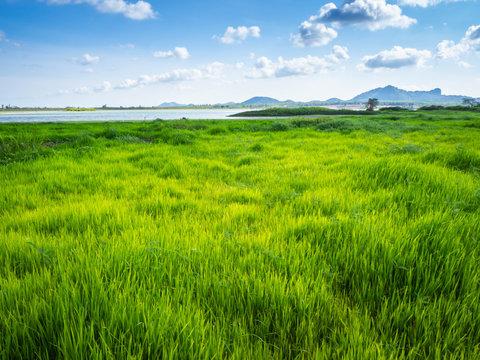 Green grass at lake park landscape