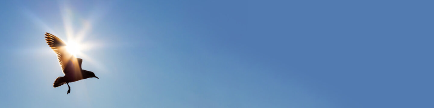 Bird Flying In Front of The Sun in a Blue Sky Panorama Web Banner