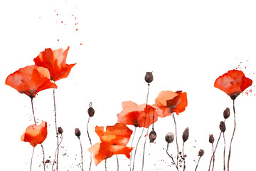 Watercolor pattern with wild red poppies on white background.