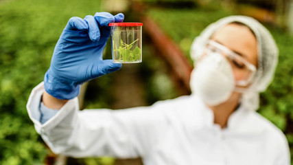 Close-up of biologist holding plant sample while working in a plant nursery.