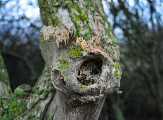 Tree Trunk with Woodworm