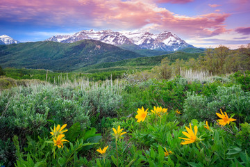 In de dag Groene Summer landscape in the Wasatch Mountains, Utah, USA.