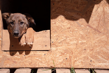 Photo of ginger dog sitting in wooden booth in yard on summer