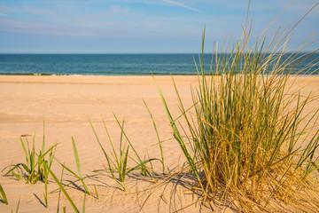 beach grass on a beach of the Baltic sea