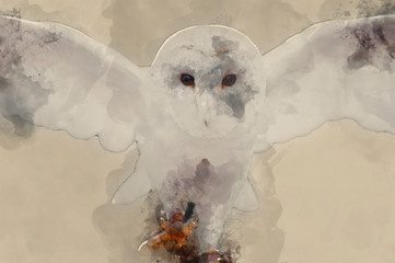 Fototapete - Digital watercolor painting of Barn owl bird of prey in falconry display