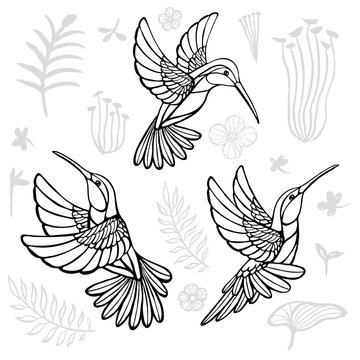 Hummingbirds with floral elements black birds in lines on white background tattoo sketch style. Hand drawn vector illustration.