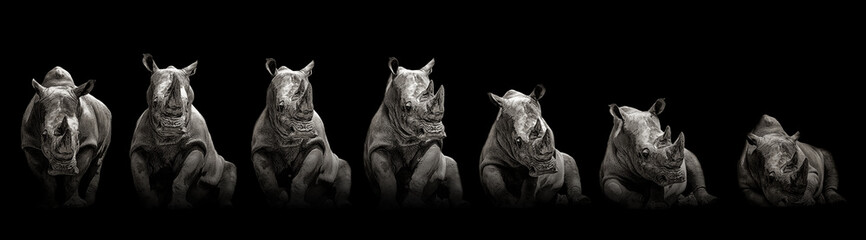 Poster de jardin Rhino Moving rhino monochrome