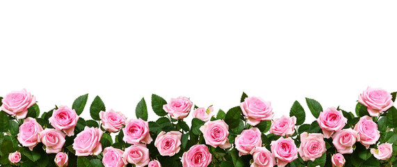 Pink rose flowers in a border arrangement Wall mural