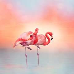 Aluminium Prints Flamingo Two Pink flamingos at sunset