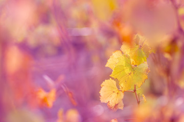 Nature blurred colorful background. Shallow depth of field. Toned image. Copy space. Art photography.