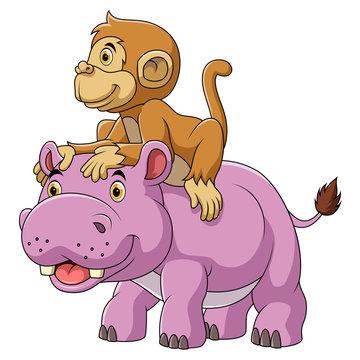 Big hippo and cute monkey