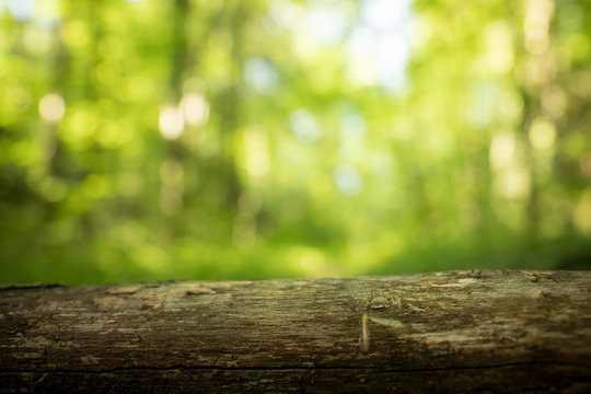 Tree trunk in the forest: Close up picture, blurry green background