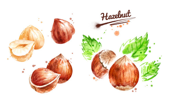 Watercolor illustration set of hazelnut