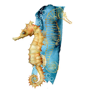 Watercolor seahorse composition. Hand painted underwater animals isolated on white background. Aquatic golden line art illustration for design, print or background.