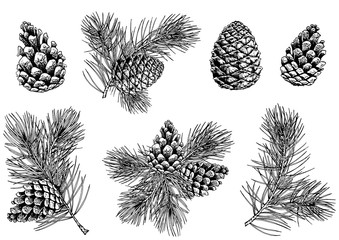 Pine branches and cones. Hand drawn vector illustration. Isolated elements for design.
