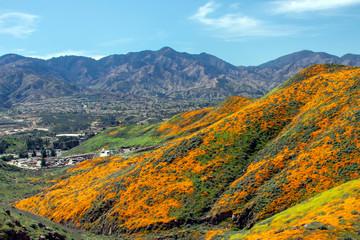 California Wild Flower Super Bloom Town