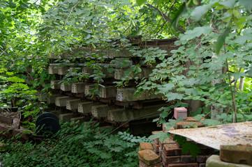 Vergessene Eisenbahnschienen - von der Natur erobert.
