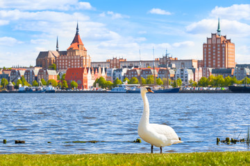 Sunny Day at Hanseatic City of Rostock / Swan on riverside at city of Rostock, Germany - view to nice old town with brick buildings and wharf, wide sky at springtime (copy space) Wall mural