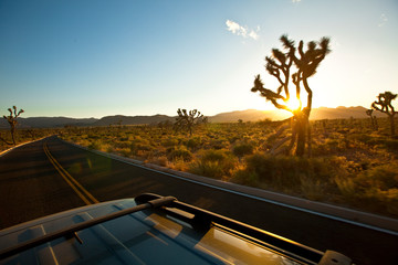 The back of a suv on the scenic roads of Joshua Tree National Park, California.