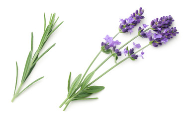 Stores à enrouleur Lavande Lavender Flowers Isolated On White Background