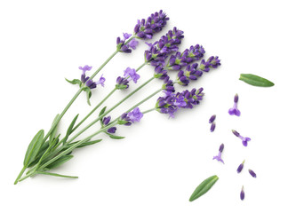 Lavender Flowers Isolated On White Background Wall mural