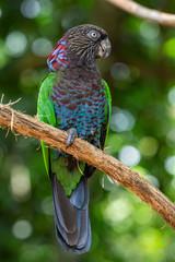 Beautiful exotic tropical parrot bird in the Bird's Park