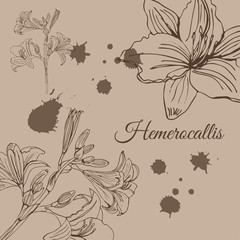 Template with   sketch of  hemerocallis flowers  and abstract spots. Hand drawn ink  sketch on sepia background. Retro style.