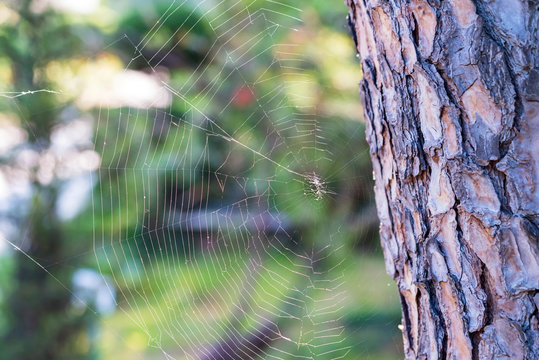 Close up white spiderweb next to tree trunk hanging outdoors