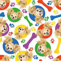 Bunt und verspielt Chihuahua