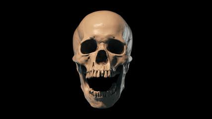 Human Skull - 3D papercraft model. Downloadable DIY template ... | 240x427