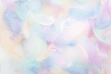 abstract nackground with soft colorfull feathers. Flat lay