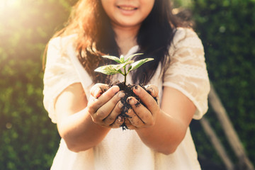 Fototapete - Young plant tree sprout in woman hand. Concept of farming and environment protecting.