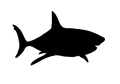 Graphical vector silhouette of shark isolated on white,illustration