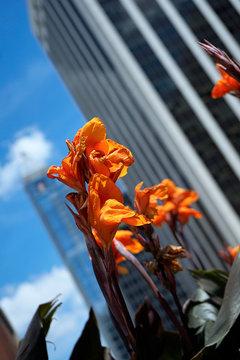 spring urban flowers blooming