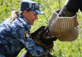 An officer holds a German shepherd dog attacking a trainer during the annual cynologist competition for teams of the Federal Penitentiary Service, outside Krasnoyarsk