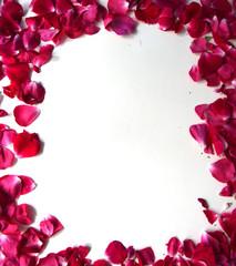 Frame of pink rose petals, white background