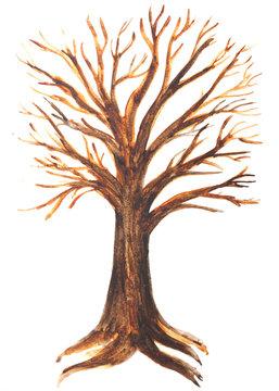 disegno di un albero con le radici acquerello sfondo bianco