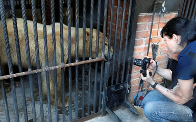 Zookeepers take pictures of a female polar bear, which was found stray in the industrial city of Norilsk, after its's arriving at the zoo in Krasnoyarsk