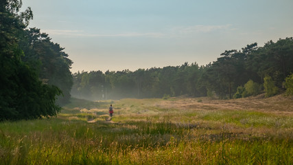 Sunny summer day after the storm. Beautiful meadow with mist. Path in field with wildflowers. Gdansk, Stogi, Poland.