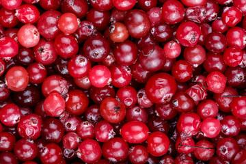 Fresh crop of cranberries.