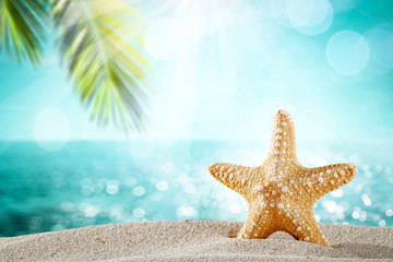 Summer background of beach with shells on sand and summer sunny day.