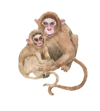 Hand drawn watercolor illustration with cute monkeys. Baby and mother monkey isolated on the white background