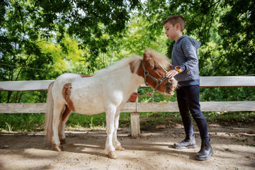 Full length of Caucasian boy grooming adorable white and brown pony horse. Sunny day on ranch...