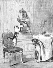 The domestic animals, a dog, a cat, and a parrot free in the house make a party in the parlor while the landlord is away