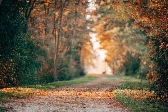 autum path