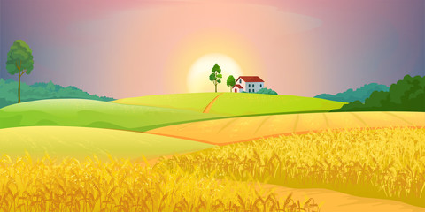 Wheat fields. Village farm landscape with green hills and sunset. Vector bright illustration rural agricultural countryside with buildings and trees Fototapete